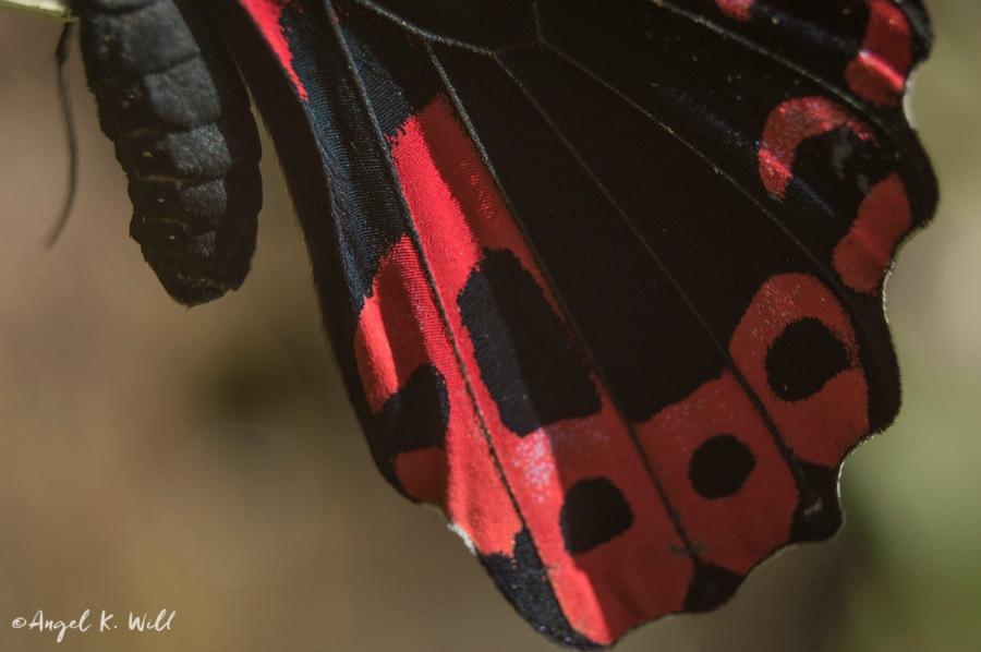 Photo Day: Butterflies &Botanicals