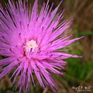 roadside-flower