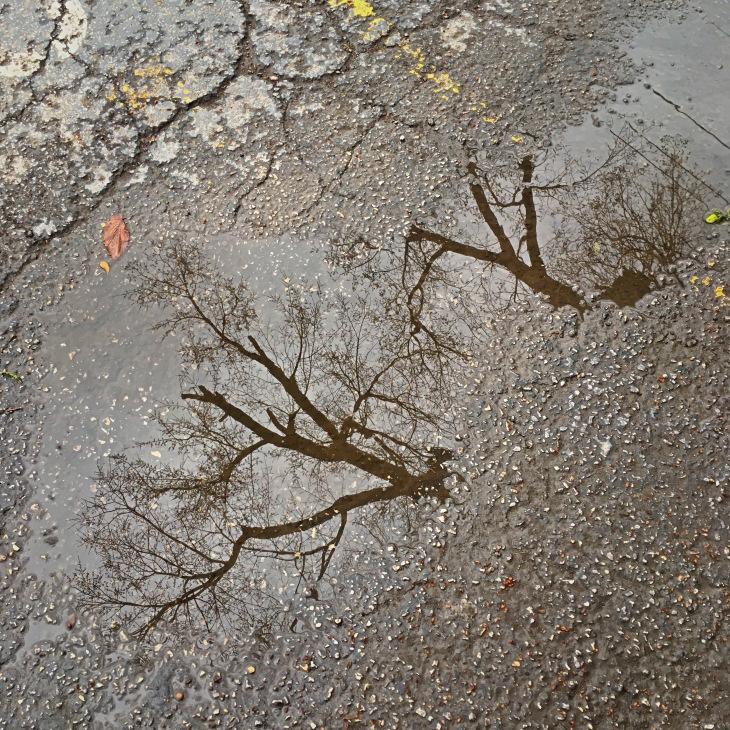 i-concrete-treetops-deep-ellum-angelkwill