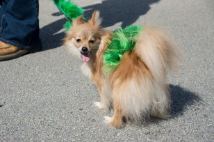 St-Paddys-Pickle-Parade-Mansfield-angelkwill-04