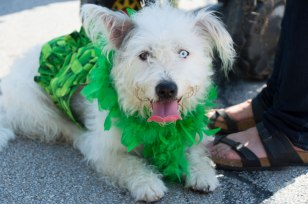 St-Paddys-Pickle-Parade-Mansfield-angelkwill-05