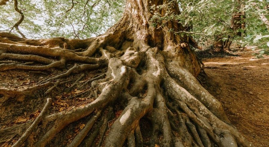 A Haiku: Roots