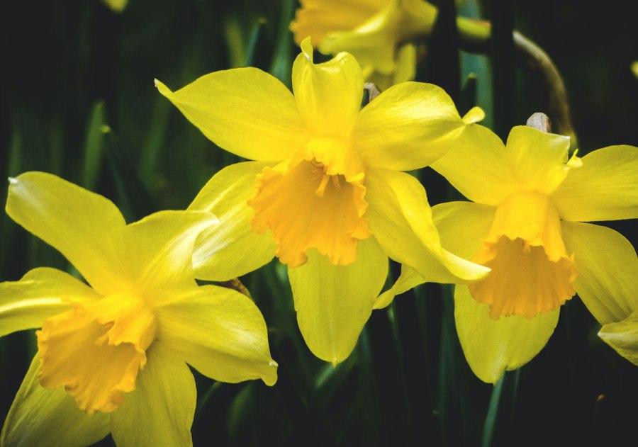 A Haiku: Bloom